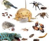 hrana vie pentru reptile