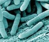 probiotice de care avem nevoie pentru flora intestinala