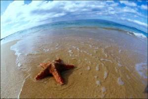 Stelele de mare