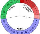 Metoda calendarului in contraceptie